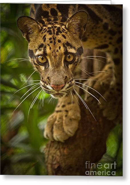 Golden Leopard Greeting Cards - Jungle Princess Greeting Card by Ashley Vincent