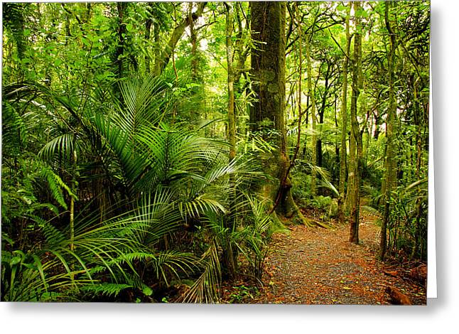 Jungle scene Greeting Card by Les Cunliffe