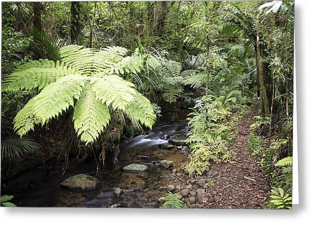 Forest Creek Greeting Cards - Jungle stream Greeting Card by Les Cunliffe