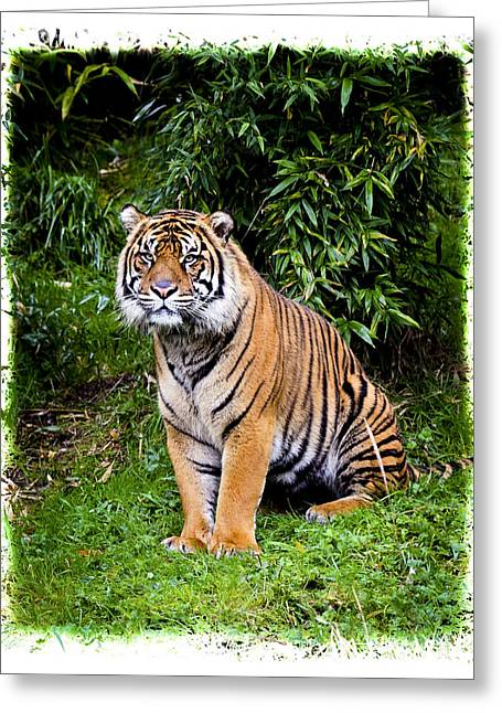 Growling Greeting Cards - Jungle Tiger Greeting Card by Steve McKinzie