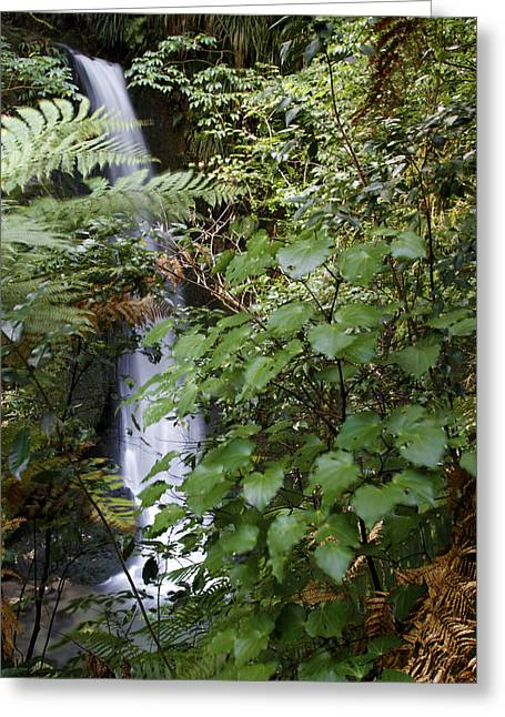 Ecology Greeting Cards - Jungle water Greeting Card by Les Cunliffe