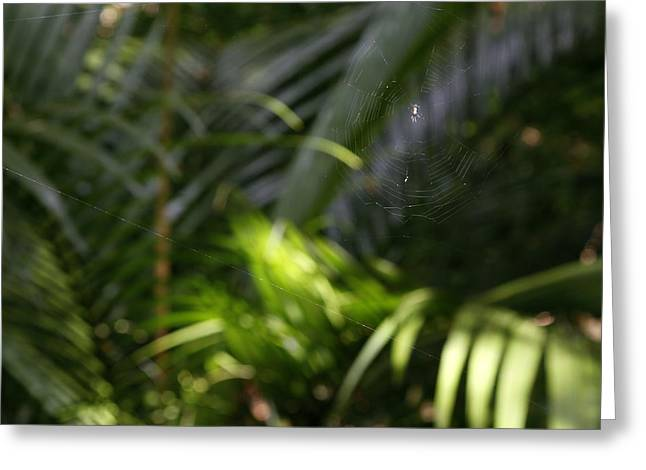 Tropical Photographs Photographs Greeting Cards - Jungle web Greeting Card by Les Cunliffe