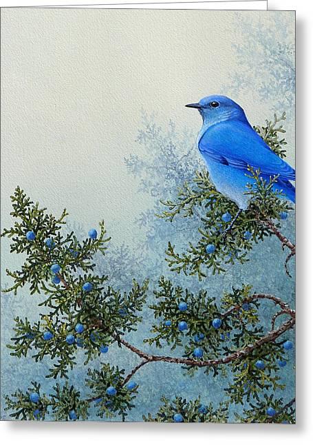 Western Blue Bird Greeting Cards - Juniper Berries Greeting Card by Mike Stinnett