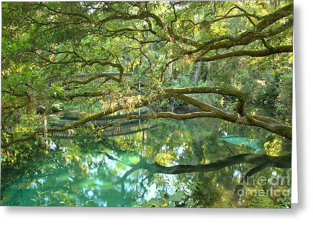 Oak Hammocks Greeting Cards - Juniper Springs Fern Hammock Greeting Card by Adam Jewell