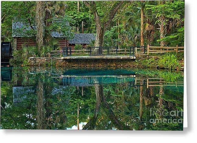 Juniper Springs Florida Greeting Card by Adam Jewell