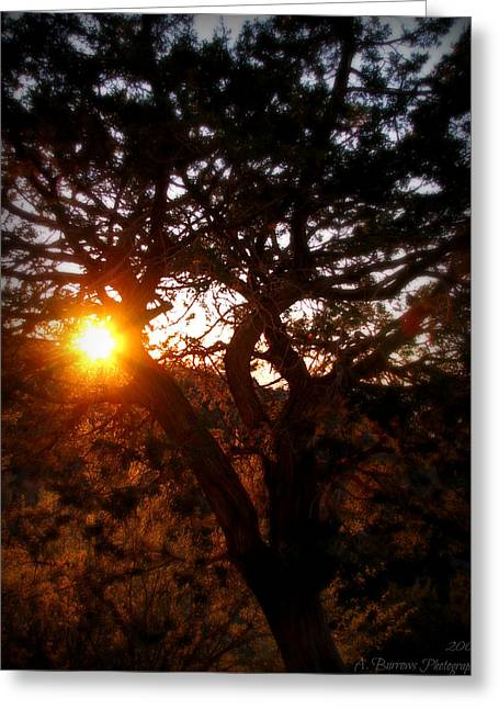 Rincon Greeting Cards - Juniper Sunset Greeting Card by Aaron Burrows