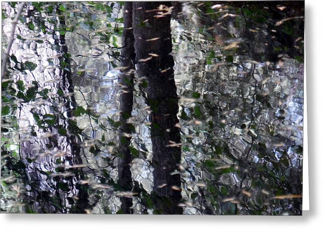 Trees Reflecting In Creek Greeting Cards - Junk in the Water Greeting Card by Chris Gudger