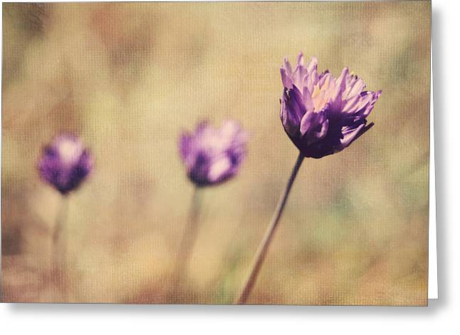 Texture Flower Greeting Cards - Just a Breath Away Greeting Card by Laurie Search