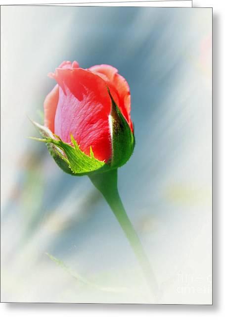 Floral Digital Art Digital Art Greeting Cards - Just A Bud Greeting Card by Judy Palkimas