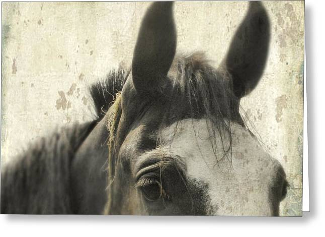 Horse Images Digital Greeting Cards - Just A Horse Greeting Card by Gothicolors Donna Snyder