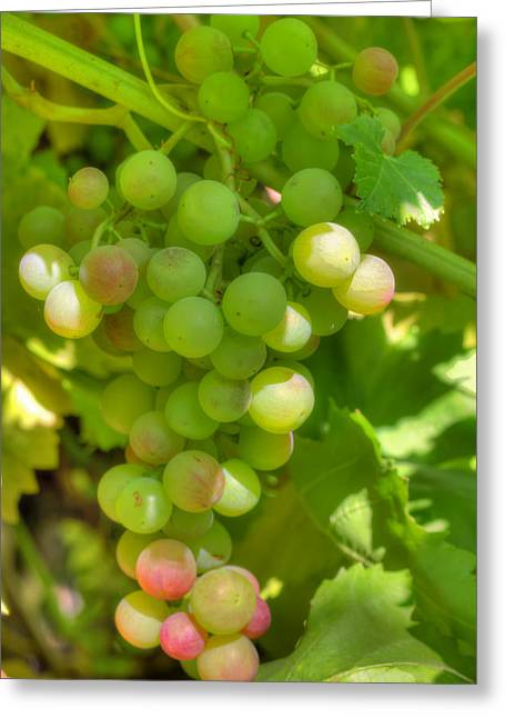 Blue Grapes Greeting Cards - Just A Little More Time On The Vine Greeting Card by Heidi Smith