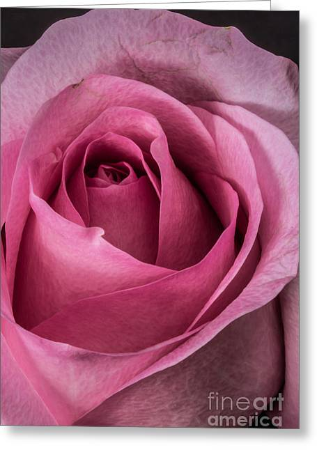 Bud Glass Art Greeting Cards - Just A Rose Greeting Card by Mitch Shindelbower