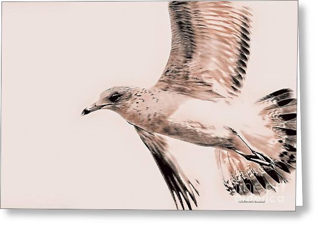 Flying Seagull Greeting Cards - Just a Seagull Greeting Card by Deborah Benoit
