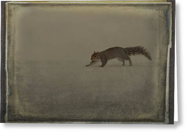 Vintage Style Photograph Greeting Cards - Just A Squirrel Greeting Card by Gothicolors Donna Snyder