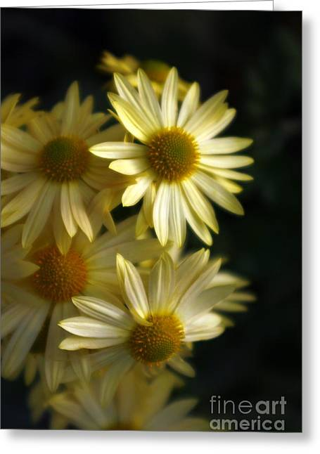 Marcia Lee Jones Greeting Cards - Just A Touch Of Light Greeting Card by Marcia Lee Jones