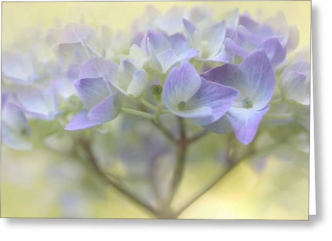 Purple Hydrangeas Greeting Cards - Just a Whisper Hydrangea Flower Greeting Card by Jennie Marie Schell