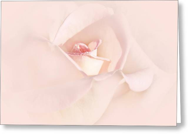 Pale Pink Greeting Cards - Just a Whisper Pink Rose Flower Greeting Card by Jennie Marie Schell