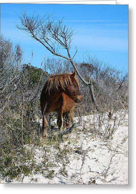 Recently Sold -  - Wildlife Refuge. Greeting Cards - Just another day at the beach Greeting Card by Photographic Arts And Design Studio