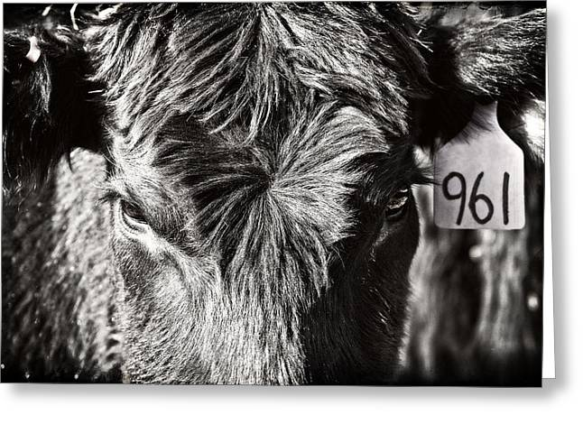 Angus Steer Greeting Cards - Just Another Number Greeting Card by Lincoln Rogers