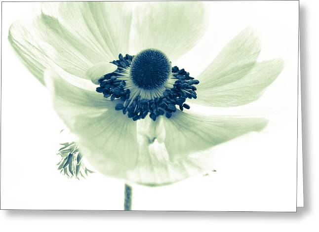 Anenome Greeting Cards - Just Because Greeting Card by Constance Fein Harding