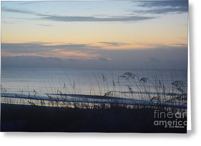 Sea Oats Pyrography Greeting Cards - Just Before Sunrise Greeting Card by Tricia Andreassen