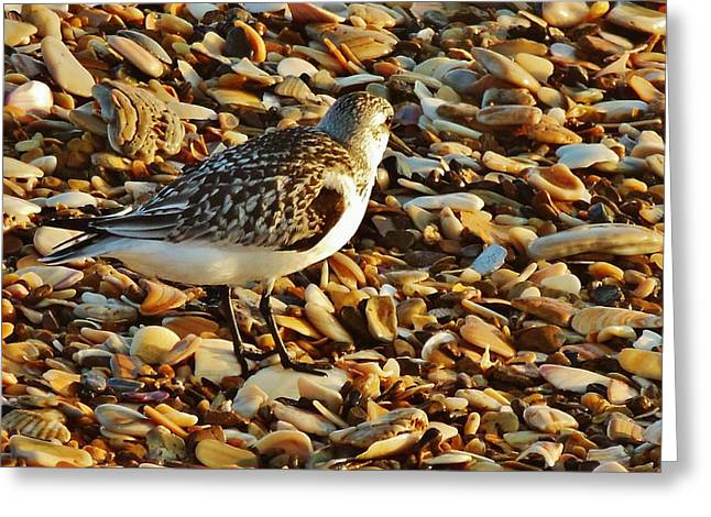 Kite Greeting Cards - Just Blend Shorebird 14 10/3 Greeting Card by Mark Lemmon