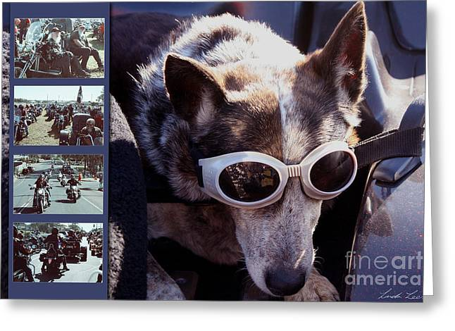 Polyptych Greeting Cards - Just call me Dog Greeting Card by Linda Lees