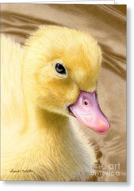 Pond In Park Greeting Cards - Just Ducky Greeting Card by Sarah Batalka