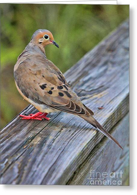 Gamebird Greeting Cards - Just Hanging Around Greeting Card by Deborah Benoit