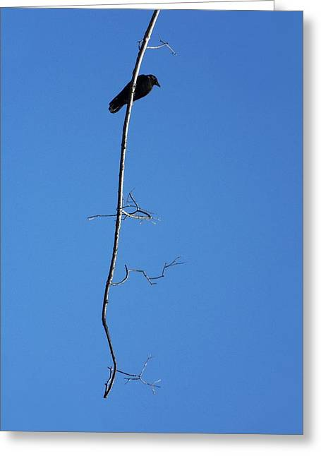 Bird On Tree Digital Greeting Cards - Just Hanging Around Greeting Card by Gothicolors Donna Snyder