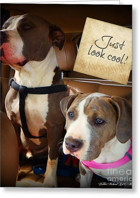 Pitty Greeting Cards - Just Look Cool Greeting Card by Bobbee Rickard