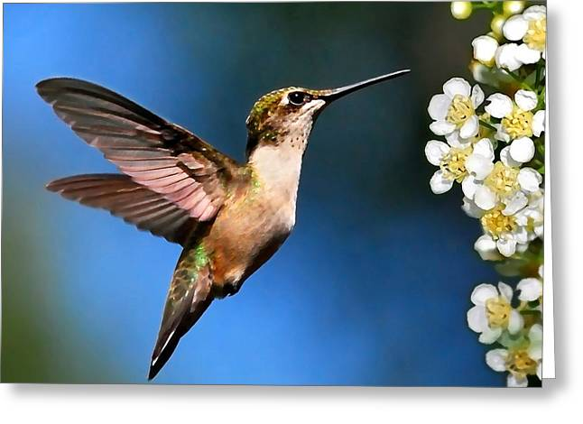 Birds With Flowers Greeting Cards - Just Looking Hummingbird Square Greeting Card by Christina Rollo