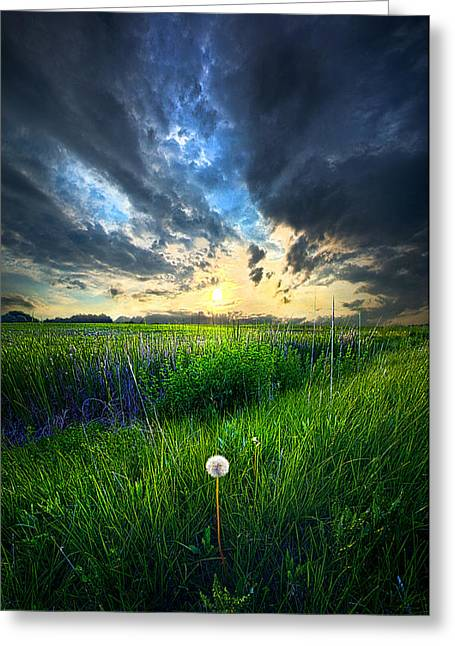 Recently Sold -  - Nature Greeting Cards - Just One Greeting Card by Phil Koch