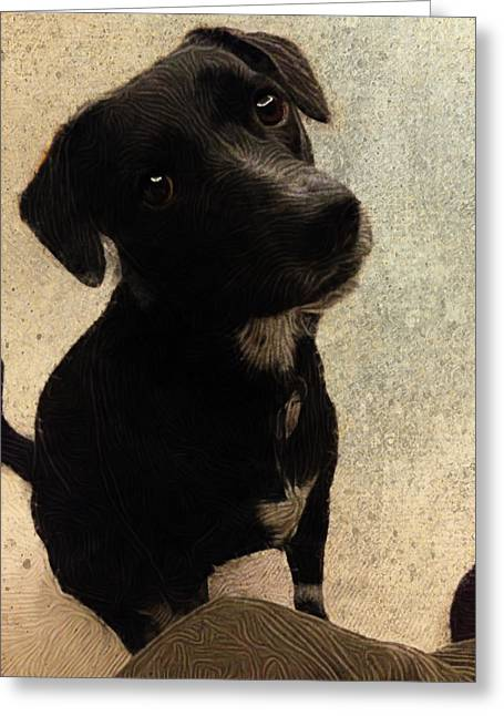 Setter Pointer Greeting Cards - Just One Question... Greeting Card by Paul Gioacchini