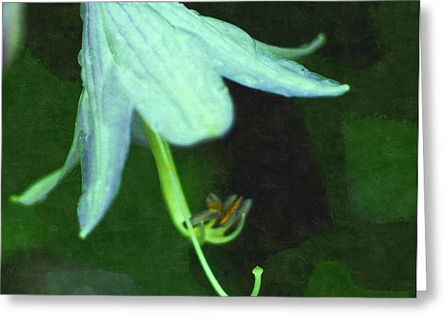 Entryway Drawings Greeting Cards - Just Opened White Flower On ADew Laden Morning  Greeting Card by Rosemarie E Seppala