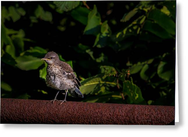 Just Out Of The Nest Greeting Card by Donna Lee
