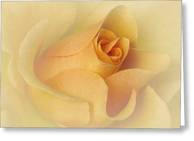 Blooms Greeting Cards - Just Peachy Greeting Card by David and Carol Kelly
