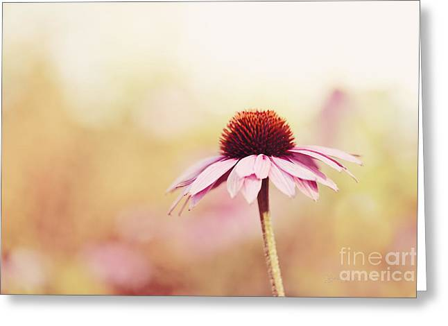 Just Peachy Greeting Card by Beve Brown-Clark Photography