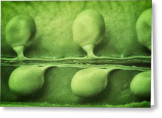 Immature Greeting Cards - Just Peas in a Pod Greeting Card by Tom Mc Nemar