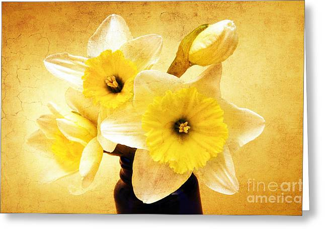 Isolated Mixed Media Greeting Cards - Just Plain Daffy 1 - Flora - Spring - Daffodil - Narcissus - Jonquil Greeting Card by Andee Design