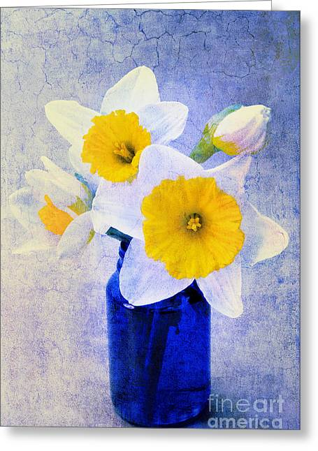 Isolated Mixed Media Greeting Cards - Just Plain Daffy 2 In Blue - Flora - Spring - Daffodil - Narcissus - Jonquil  Greeting Card by Andee Design