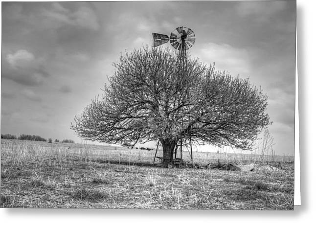Just Plain Kansas Greeting Card by JC Findley
