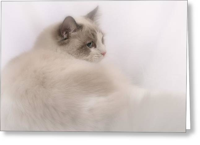 Ragdoll Greeting Cards - Just Relaxing Greeting Card by David and Carol Kelly