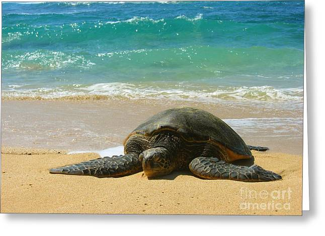 Laniakea Beach Greeting Cards - Just Resting Greeting Card by Christine Stack