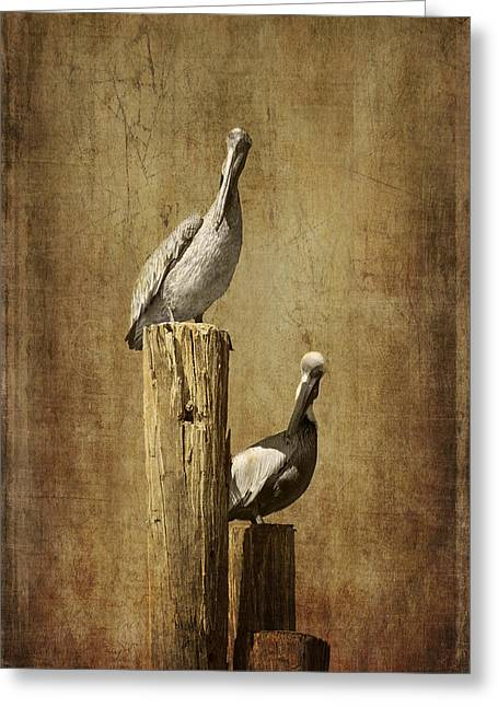 Seabirds Greeting Cards - Just the Two of Us Greeting Card by Kim Hojnacki