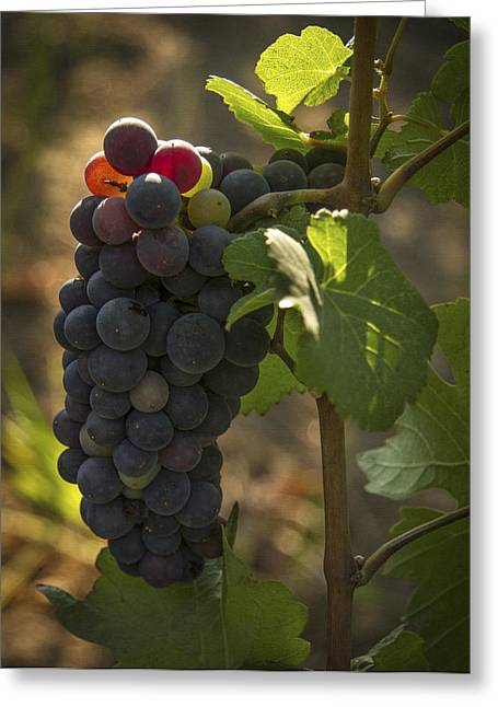 Purple Grapes Greeting Cards - Just Waking Up Greeting Card by Jean Noren