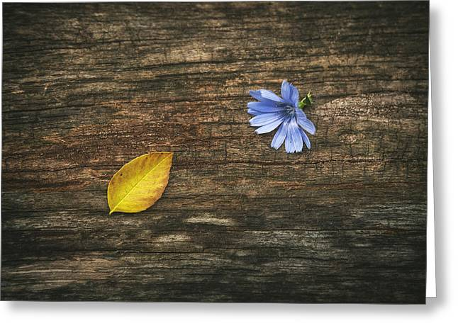 Flower Fine Art Photography Greeting Cards - Juxtaposition Greeting Card by Scott Norris