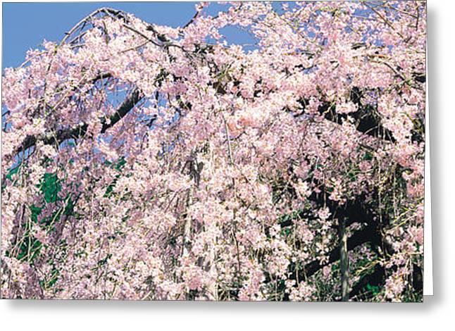 Kyoto Greeting Cards - Jyoshokou-ji Kyoto Japan Greeting Card by Panoramic Images