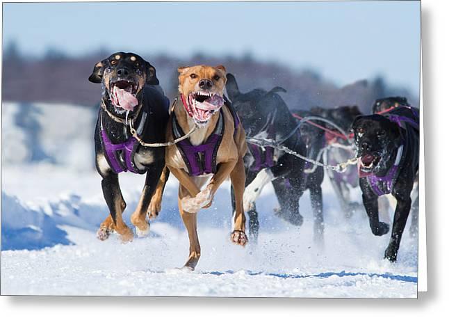 Huskies Greeting Cards - K9 Athletes Greeting Card by Mircea Costina Photography