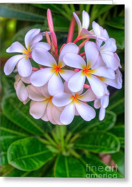 Lahaina Greeting Cards - Kaanapali Plumerias Greeting Card by Kelly Wade